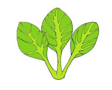 spinach drawing easy for beginners