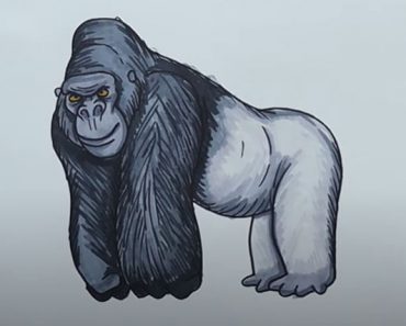 Gorilla Drawing easy Step by Step