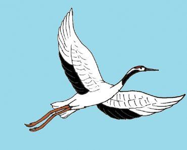 How to Draw a Crane