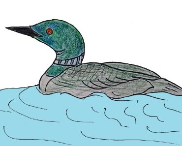 How to Draw a Loon