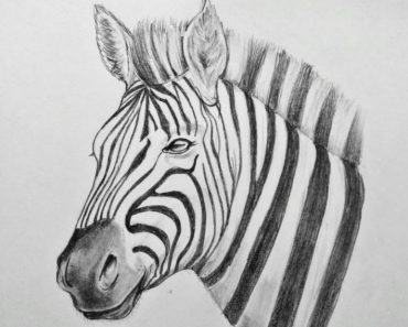 How to Draw a Zebra Head with Pencil