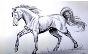 How to draw a Horse with Pencil