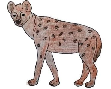 Hyena Drawing Easy Step by Step