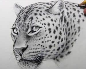 Leopard Face Drawing Step by Step