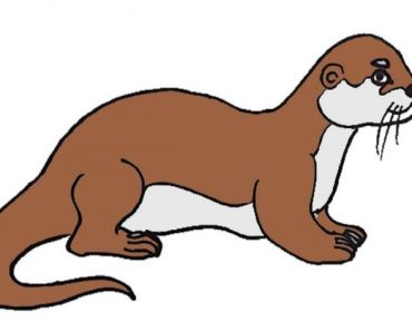Otter Drawing easy Step by Step