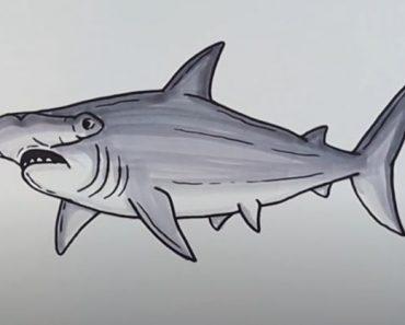 How to Draw a Hammerhead Shark