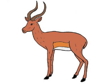 How to Draw an Impala
