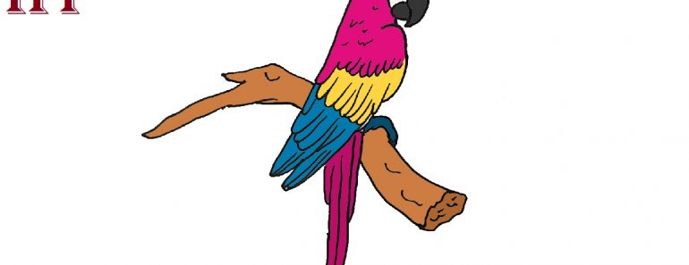 How to Draw a Scarlet Macaw