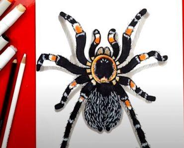 How to Draw a Tarantula Step by Step