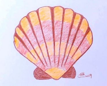 How to draw a seashell